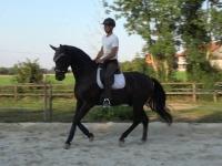 Alexander - eigenes Training