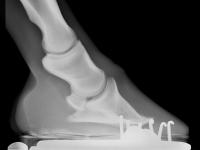Röntgen rechts vorne