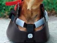 Swiss Horse Boot Hufschuh